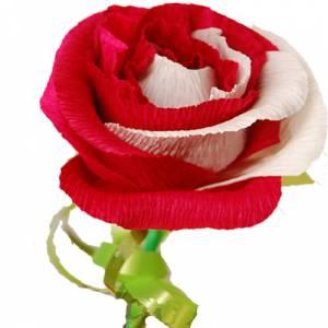Prácticos mujer - Flor Bombón - Tamaño Grande - Bicolores